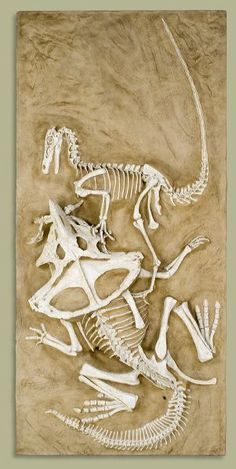 Paleontologists found two dinosaurs frozen in battle as fossils! - Science - Jul 18, 2012 - Interesting Facts and Fun Facts - This looks so fake. I need to check this out.