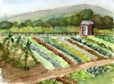 Thomas Jefferson's garden