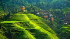 House of the thousand steps by Max Witjes - Darzhai, province of Longsheng, China - famous rice terras area in the south of China, close to the city of Guilin Rustic Wallpaper, Photo Wallpaper, Hd Wallpaper, Rice Terraces, Green Valley, Cover Photos, Beautiful World, Beautiful Places, Trees To Plant