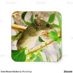 Cute Mouse Sticker
