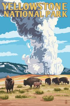 Yellowstone National Park - Old Faithful Geyser & Bison Herd - Lantern Press Poster