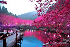 Nature' is a Valentine:  Cherry Blossom Lake  Sakura, Japan  photo by: Bella Luce