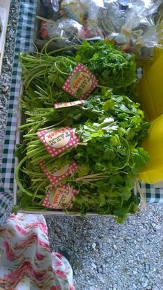 Fresh coriander for guests