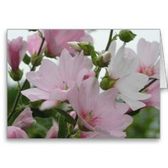 Pink Flowers Impatiens Family Cards