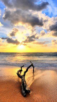 Summertime, Sunrise, Beach, Sea, Dead wood, Landscape, Nature