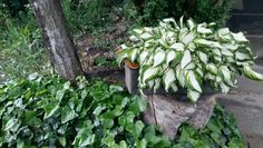 My garden pot