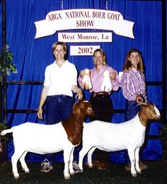 Powell-Holman National Yearling Boer Goat Does. Show Goats for sale.