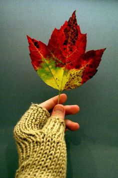 cozy & colorful Best Seasons, Autumn, Fall, Fingerless Gloves, Arm Warmers, Knitting, Color, Accessories, Design