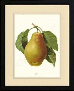 Pear - Pyrus sp. Fruit Botanical Art Illustration by Redoute, Framed $149.95