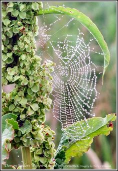 Late Autumn with its heavy morning dew high lights the gossamer webs with sparkling crystals of light.