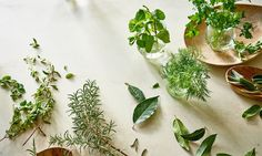 7 Lesser-Known Healing Herbs That Belong In Your Kitchen