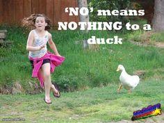 Ducks don't care