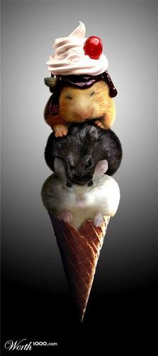 Rat IceCream this is the WEIRDEST pic... Who thinks hey, let's stack the rats up like ice cream scoops???