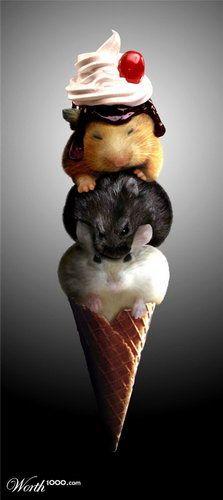 Rat IceCream