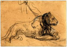 Rembrandt, A chained lioness lying on the ground in profile to r. c.1638-42 Black chalk, touched with grey wash, heightened with white, on brown prepared paper