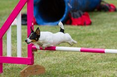Games you can do with your dog to keep you both fit  http://www.saga.co.uk/health/fitness/dog-games-to-help-you-both-stay-active.aspx
