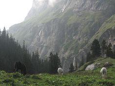 Kullu Hill Station - Famous As Valley Of Gods - Himachal Pradesh - India