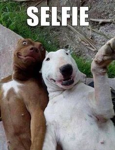 How cute are these guys! I think if a dog could get his hands on a camera they would do this.