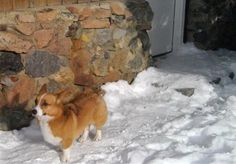 Days After Montana Avalanche, Missing Dog Returns #pet #dog