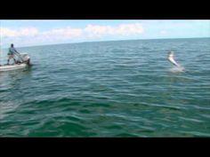 #Bonefish & #Tarpon Trust - Home