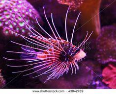 Exotic fish Stock Photos, Exotic fish Stock Photography, Exotic ...