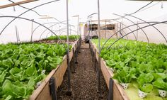"""An amazing farm has sprouted in an unlikely place—the rooftop of Israel's oldest mall in the heart of Tel Aviv. Hidden between high-rises, """"Green in the City"""" is a rooftop farm that produces 10,000 heads of leafy greens a month year-round using organic, hydroponic and aquaponic methods—no dirt required. This thriving example of urban agriculture is one of many surprising sustainable initiatives at the Dizengoff Center shopping mall, which includes bird habitat, a tree nursery, rooftop…"""