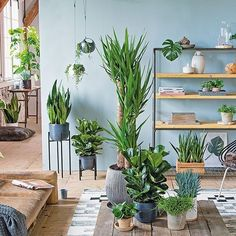 De grote Yucca laat zich goed combineren met kleinere planten in de  woonkamer.  #yucca #interior #groenisgoedvoorje #binnen