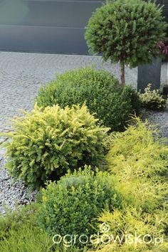 Ogród z lustrem Plants, Gardens, Tree Structure, Plant, Planets