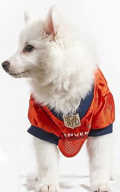 3dd224de0 Official NFL Denver Broncos Football Jersey for your Dog. They come in all  sizes! So cute! www.dogfootballjersey.com