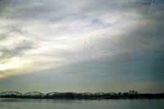 Grudziądz birds, January 2014  Praktica MTL 3, Opteco 35mm, Fujifilm asa200