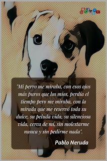 Tomado de la obra Jardines de Invierno. Pablo Neruda  #VCPBT #FraseSemanal Dog Phrases, Animals And Pets, Cute Animals, Dog Quotes Funny, Animal Quotes, Jack Russell Terrier, Pitbull Terrier, Dog Life, I Love Dogs