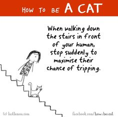 How to be a cat -true