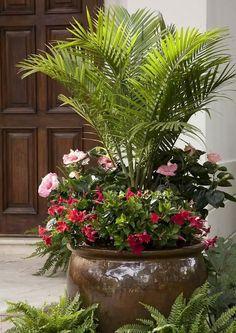 Palm, Hibiscus and Freesia full sun