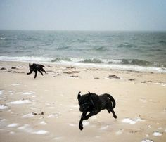 It may be cold on Cape Cod, but these dogs are still enjoying a beach day!