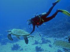 Einmal im Roten Meer tauchen...