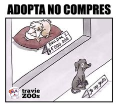 Adoptar siempre es mejor! All About Animals, Animals And Pets, Baby Animals, Cute Animals, Funny Spanish Memes, Funny Memes, Cute Gif, T Rex, I Love Dogs