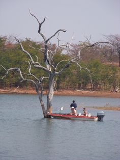 Typical Kariba picture Zimbabwe, South Africa, Beats, Followers, Nostalgia, Miniature, Southern, African, Memories