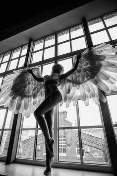 MF❣ Mujer Cisne