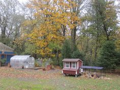 Winter 2015 placement for Chicks home til next Spring