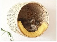 Cat bed made out of an Ikea basket. Doing this 2019 Cat bed made out of an Ikea basket. Doing this The post Cat bed made out of an Ikea basket. Doing this 2019 appeared first on Blanket Diy. Crazy Cat Lady, Crazy Cats, Lit Chat Diy, Ikea Basket, Cat Basket, Diy Cat Bed, Diy Bed, Cat House Diy, House For Cats