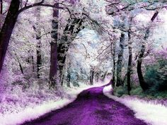 down_the_purple_path-1579186.jpg (1024×768)