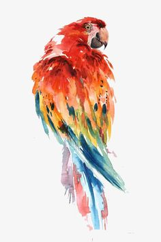 Watercolor of Bird art inspiration & decor A beautiful, modern and affordable way to decorate your place, or make a special unique gift. Print of my original watercolor painting. (The original belong to Artist collection) Print sizes : paper size i Watercolor Bird, Watercolor Animals, Watercolor Landscape, Watercolor Images, Inspiration Art, Bird Prints, Bird Art, Painting & Drawing, Parrot Painting