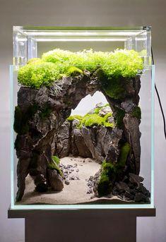 Aquarium Garden, Aquarium Landscape, Betta Fish Tank, Nature Aquarium, Aquarium Fish Tank, Planted Aquarium, Cichlid Aquarium, Aquarium Aquascape, Fish Tank Terrarium