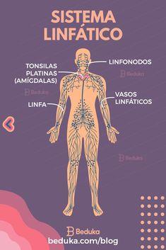 O corpo humano é constituído pelos sistemas: cardiovascular, respiratório, digestivo, nervoso, endócrino, excretor, reprodutor, esquelético, muscular, imunológico e linfático. Esses sistemas estão conectados mas exercem funções específicas e vitais no organismo. Greys Anatomy, Anatomy Art, Study Biology, Medicine Notes, Study Planner, Study Notes, Reiki, Knowledge, Science