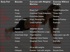 The Muscle Cheat Sheet: Work Every Major Muscle Group [CC's ShapeU] : CollegeCandy - Life, Love & Style For The College Girl