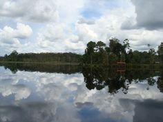 Reflection. Tasek Merimbun, Brunei Darussalam.