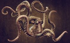 1600x1000 px octopus backround for mac by Trent Birds