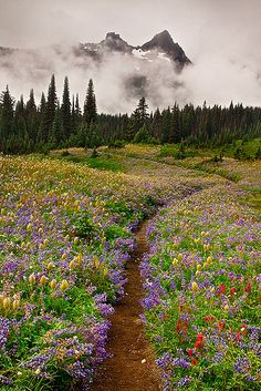 Dreaming Loved hiking in Oregon! Wildflower Dreaming: Beautiful path to Pacific Northwest CampsiteLoved hiking in Oregon! Wildflower Dreaming: Beautiful path to Pacific Northwest Campsite Beautiful World, Beautiful Places, Beautiful Sites, Mount Rainier National Park, All Nature, Adventure Is Out There, Beautiful Landscapes, The Great Outdoors, Wonders Of The World