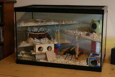 Hamster Home | by captainmcdan