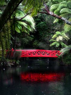 The red bridge Pukekura Park, New Plymouth